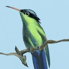 D.R. Flycatcher